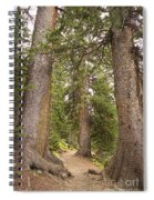 Rocky Mountain Forest Walk Spiral Notebook