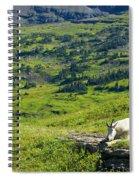 Rocky Mountain Goat Glacier National Park Spiral Notebook