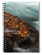 Rocky Mountain Stream Spiral Notebook