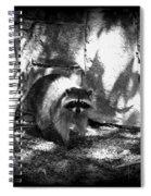 Rocky Raccoon Spiral Notebook
