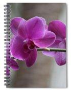 Romantic Purple Orchids Spiral Notebook