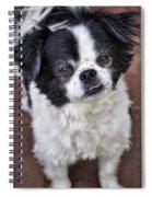 Romeo  Spiral Notebook