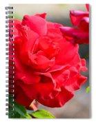 Rosas Roja Spiral Notebook