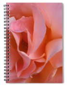 Rose 02 Spiral Notebook