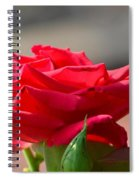 Rose And Her Buds Spiral Notebook