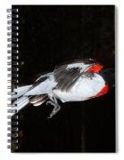 Rose-breasted Grosbeak Spiral Notebook