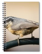 Rose Breasted Nuthatch Spiral Notebook
