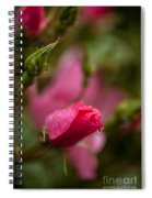 Rose Drop Spiral Notebook