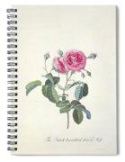 Rose Dutch Hundred Leaved Rose Spiral Notebook
