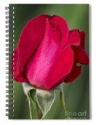 Rose Flower Series 1 Spiral Notebook