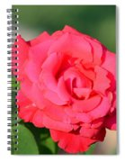 Rose In The Morninglight Spiral Notebook