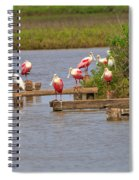 Roseate Spoonbills And Snowy Egrets Spiral Notebook