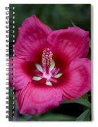 Rosey Blossom Spiral Notebook