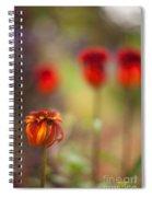 Rosso Beauties Spiral Notebook