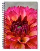 Rosy Dahlia Spiral Notebook