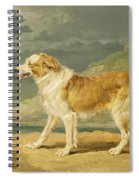 Rough-coated Collie Spiral Notebook