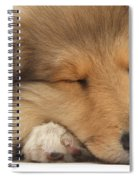 Rough Collie Pup Spiral Notebook