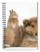 Rough Collie Pup With Sandy Netherland Spiral Notebook
