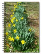 Row Of Daffodils Spiral Notebook