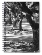 Row Of Oaks - Black And White Spiral Notebook