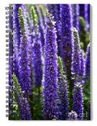 Royal Candles Spiral Notebook