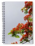Royal Poinciana Tree Spiral Notebook