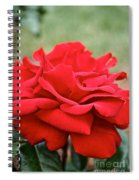 Royal Red Rose Spiral Notebook