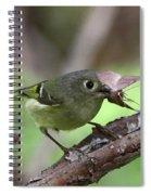 Ruby-crowned Kinglet Nabs A Moth Spiral Notebook