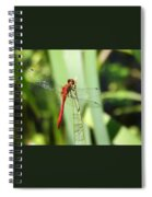 Ruby Meadowhawk Dragonfly Spiral Notebook