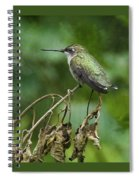 Ruby On The Perch Spiral Notebook