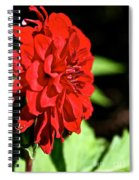 Ruby Red Dahlia Spiral Notebook