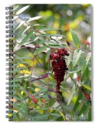 Ruby Sumac Spiral Notebook