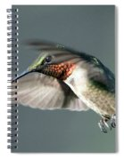 Ruby-throated Hummingbird - Hover Spiral Notebook