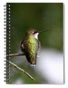 Ruby-throated Hummingbird - Hummingbird - Content Spiral Notebook