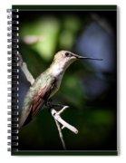 Ruby-throated Hummingbird - Just Beautiful Spiral Notebook