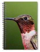 Ruby-throated Hummingbird - Macho Man Spiral Notebook