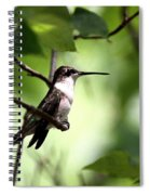 Ruby-throated Hummingbird - Shade Spiral Notebook