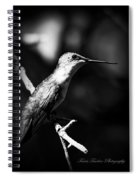 Ruby-throated Hummingbird - Signature Spiral Notebook