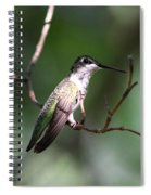 Ruby-throated Hummingbird - Hanging Low Spiral Notebook
