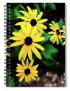 Rudbeckia  Bristol Ri Spiral Notebook