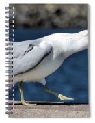 Ruffled Feathers Spiral Notebook