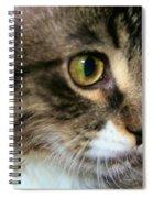Rufus 4 Months Spiral Notebook