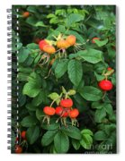 Rugosa Rose With Rose Hips Spiral Notebook