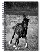 Running Free Spiral Notebook