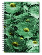 Russian Silverberry Leaf  Spiral Notebook