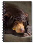 Sad Sun Bear Spiral Notebook