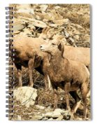 Safety In Numbers Spiral Notebook