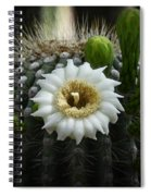 Saguaro Cactus Blooms  Spiral Notebook