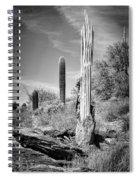 Saguaro Skeleton Bw Spiral Notebook