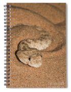 Sahara Sand Viper Cerastes Vipera Spiral Notebook